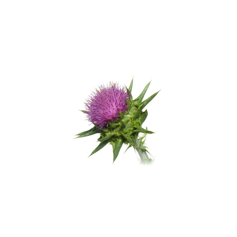 chardon marie bio 200 g lules nutri naturel. Black Bedroom Furniture Sets. Home Design Ideas