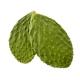 Nopal bio 120 comprimés
